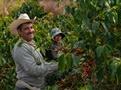 The coffee farmer as full-fledged partner of FarmersDirectCoffee